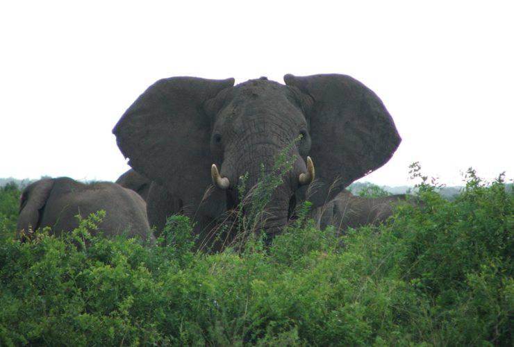 congo bracconiere elefanti