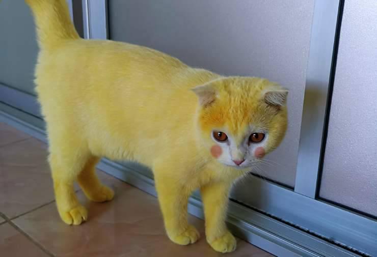 Il gatto Pikachu (Foto Facebook)
