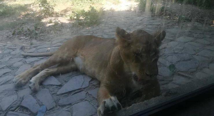 animalisti zoo regione abruzzo