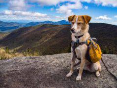 Le razze di cani più avventurosi: perfetti per escursioni e arrampicate