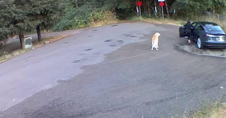 donna abbandona cane usa