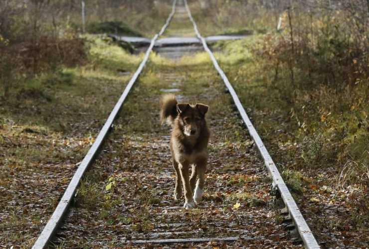 cane tromba d'aria viterbo