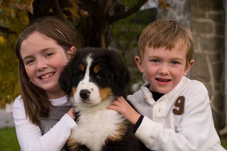 bambini con cane