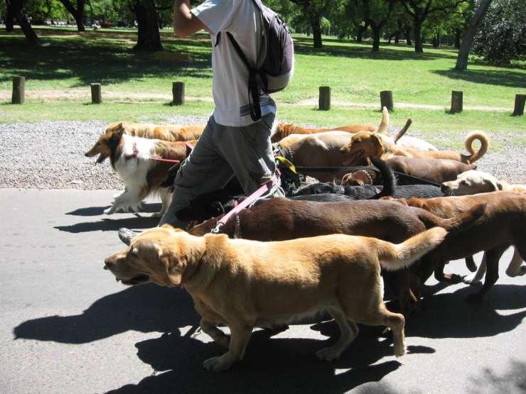 Come trovare un buon dog sitter all'occorrenza