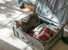 Viaggiare con gatto