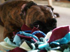 Tappeto olfattivo: un utile passatempo per il cane