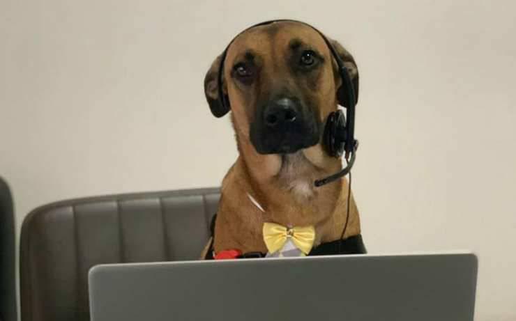 Il cane al lavoro Facebook