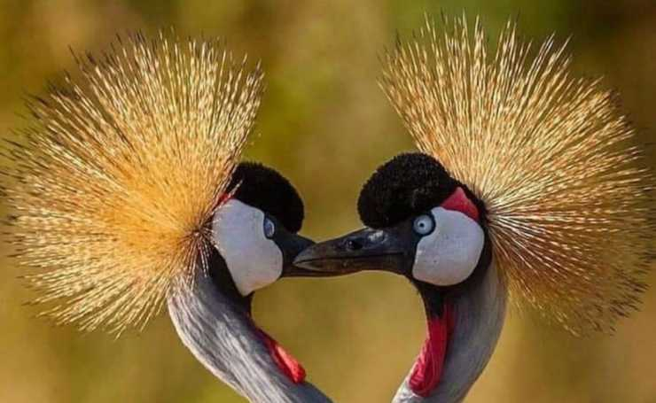 Animali innamorati (Foto Facebook)