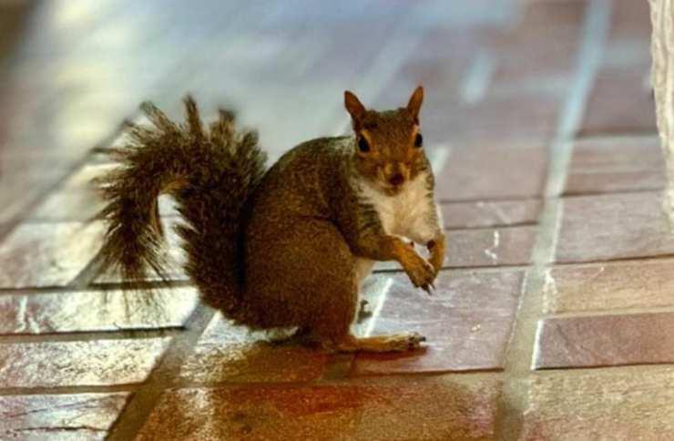 Lo scoiattolo curioso (Foto Instagram)