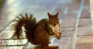 La dolcezza dello scoiattolo (Foto Instagram)