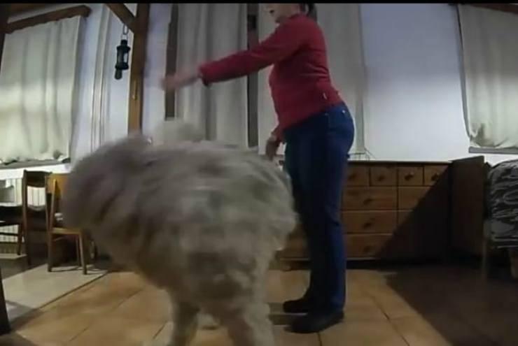 Il cane talentuoso (Foto video)