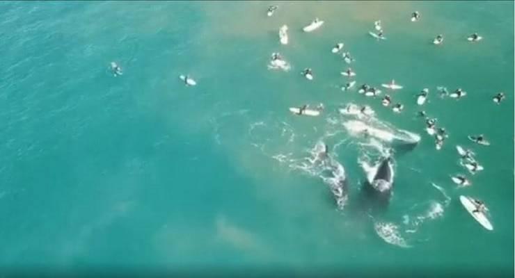 mamma balena