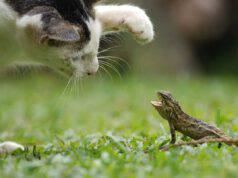 Il gatto mangia una lucertola