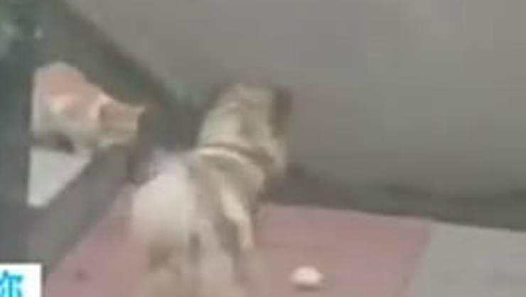 Il cane aspetta pazientemente (Foto video)