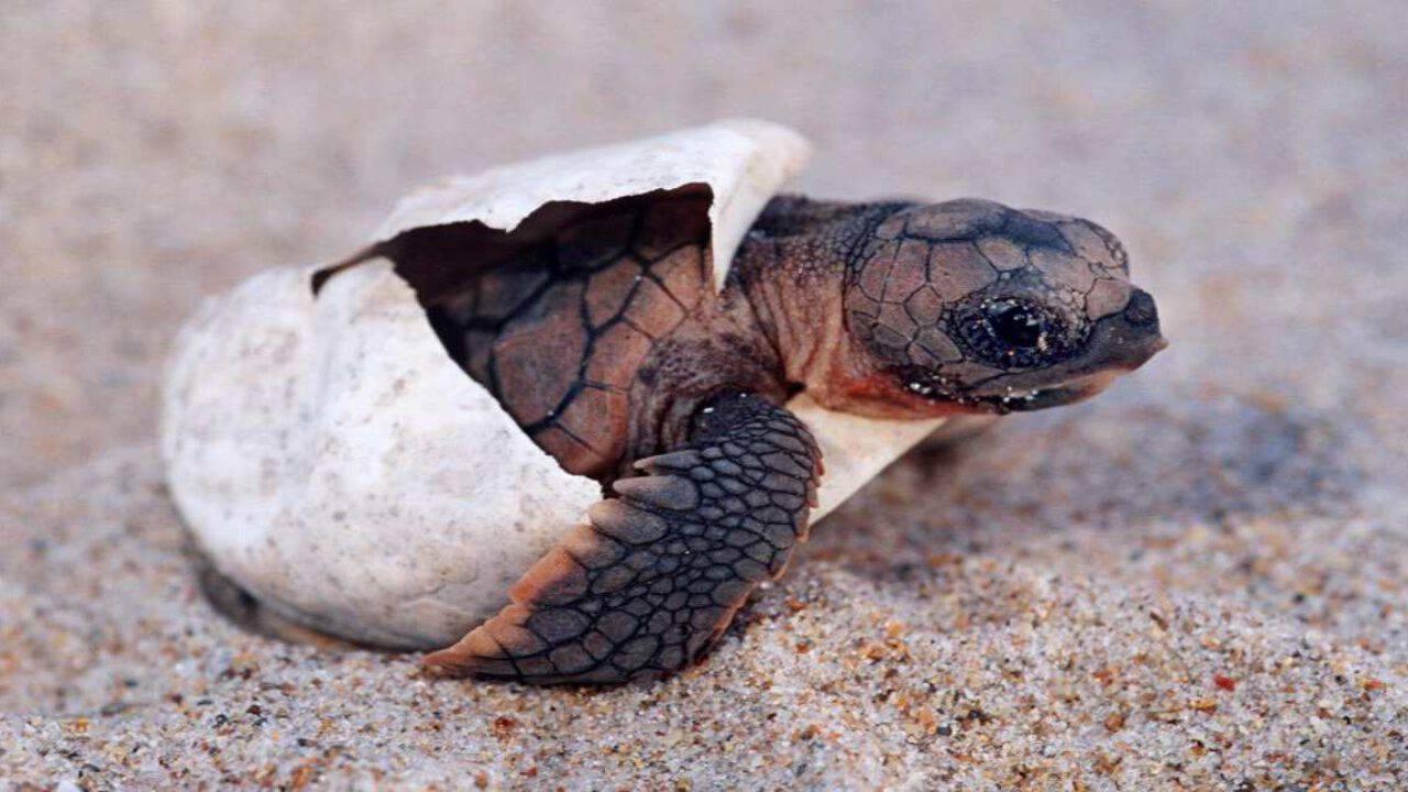 come fare con le tartarughe appena nate soldi extra online canada