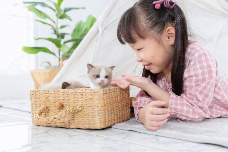 bambina con gattino