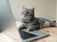 Anche il gatto può giocare ai videogiochi e divertirsi