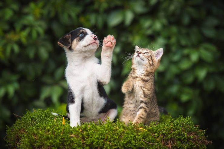 Ghiaccioli per cani e gatti
