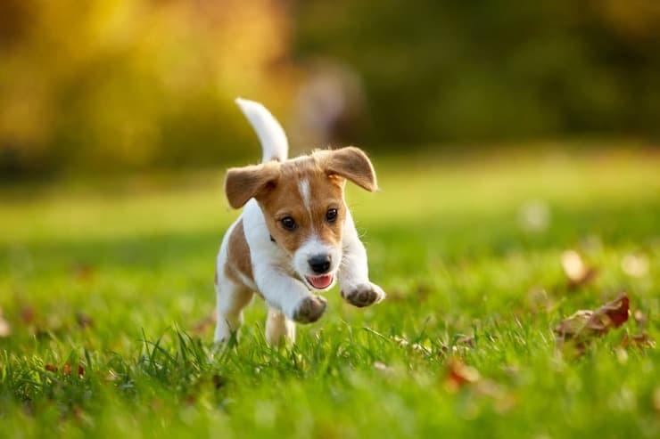 Come giocare con il cucciolo di cane (Foto Adobe Stock)