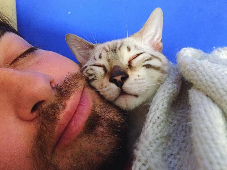 Il gatto mi dorme in testa