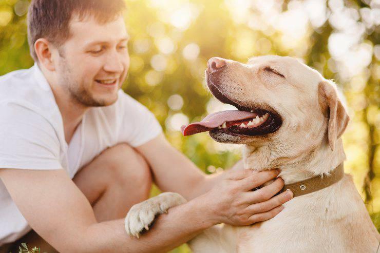 le cose in cui il cane è più bravo dell'uomo