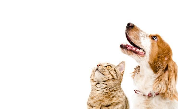 Malattie trasmissibili da cane a gatto