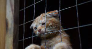 Confisca di animali (Foto Adobe Stock)