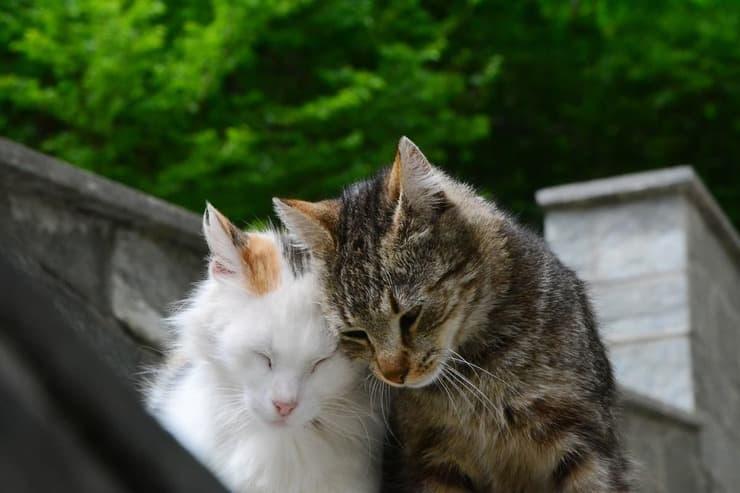 Come segnalare una colonia felina (Foto Adobe Stock)