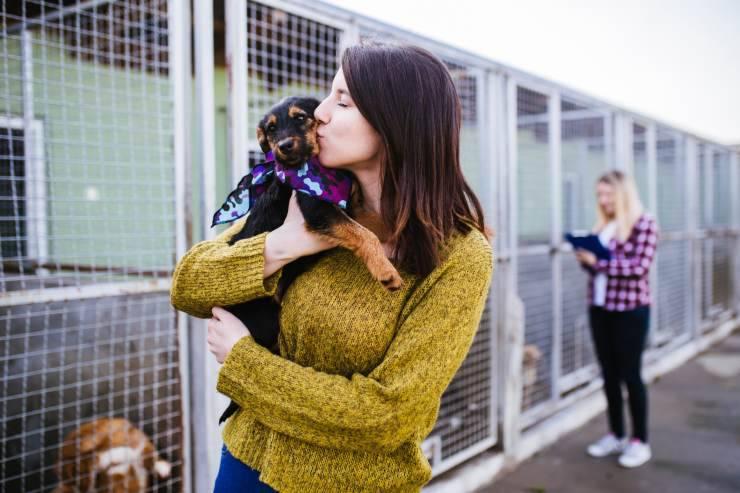 Pre-affido e post-affido del cane