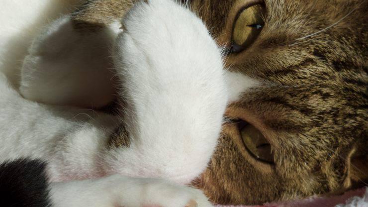 Il gatto ha il muso gonfio