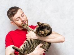 Perché il gatto non vuole stare in braccio (Foto Adobe Stock)