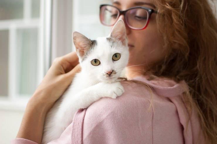 Il gatto succhia il collo