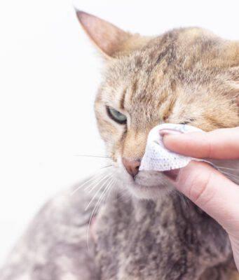 Gatto con occhi sporchi (Foto Adobe Stock)