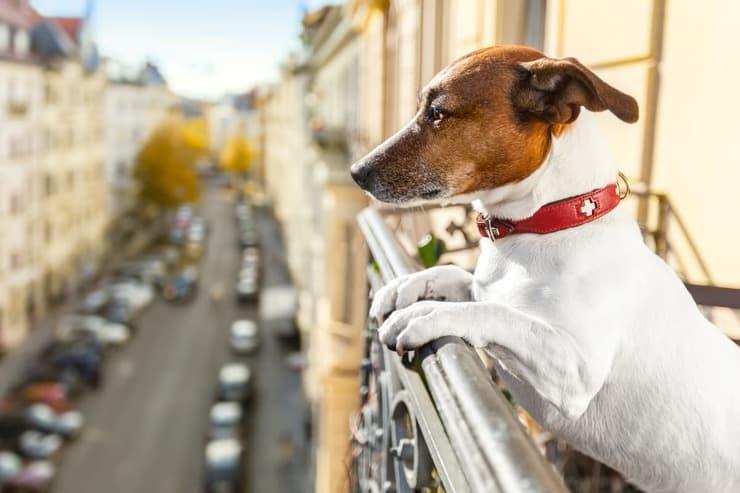 Cane sul balcone è vietato? (Foto Adobe Stock)