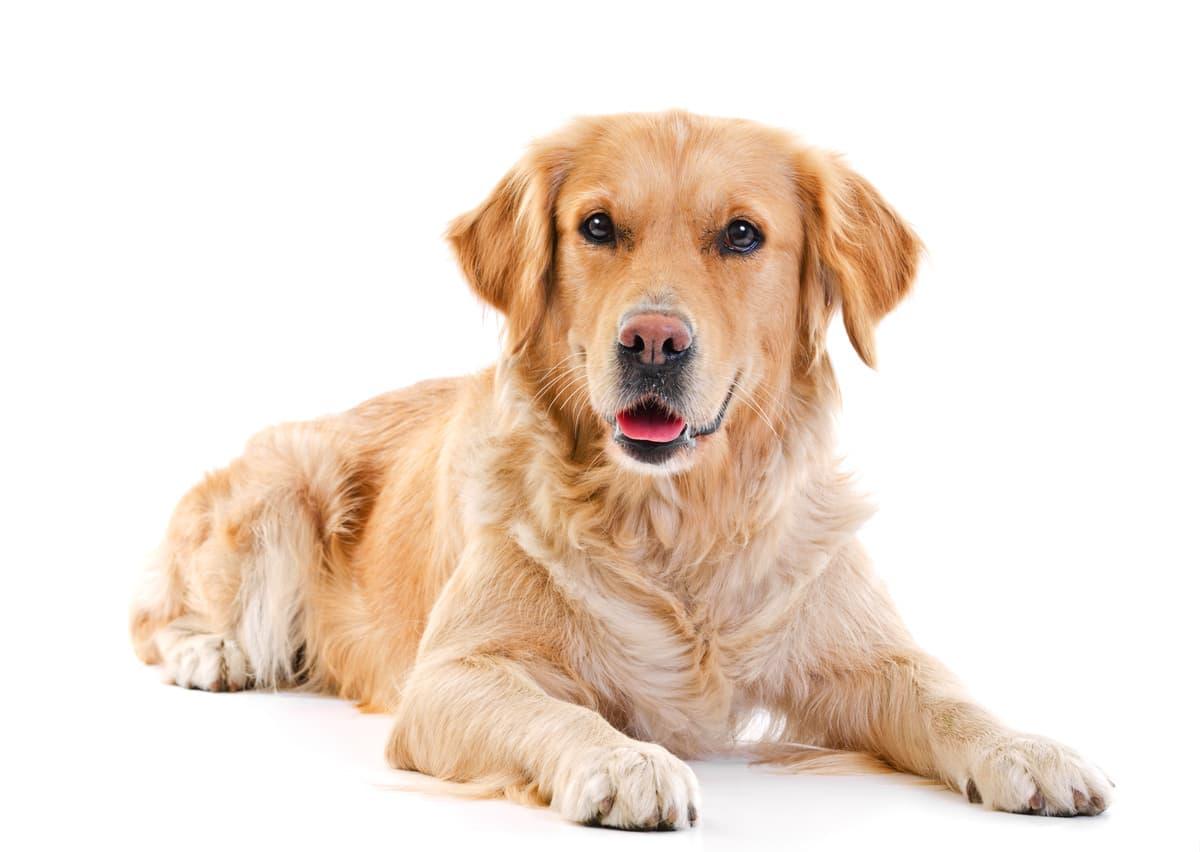 Obbligo di portare a spasso il cane: nuova legge in arrivo