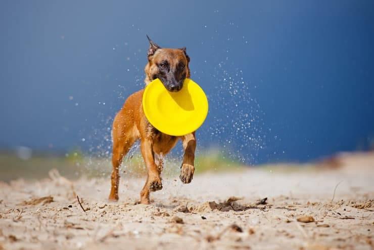 Come giocare con il cane all'aperto (Foto Adobe Stock)