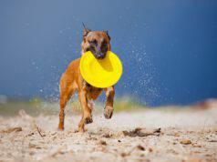 Come giocare con il cane fuori casa (Foto Adobe Stock)