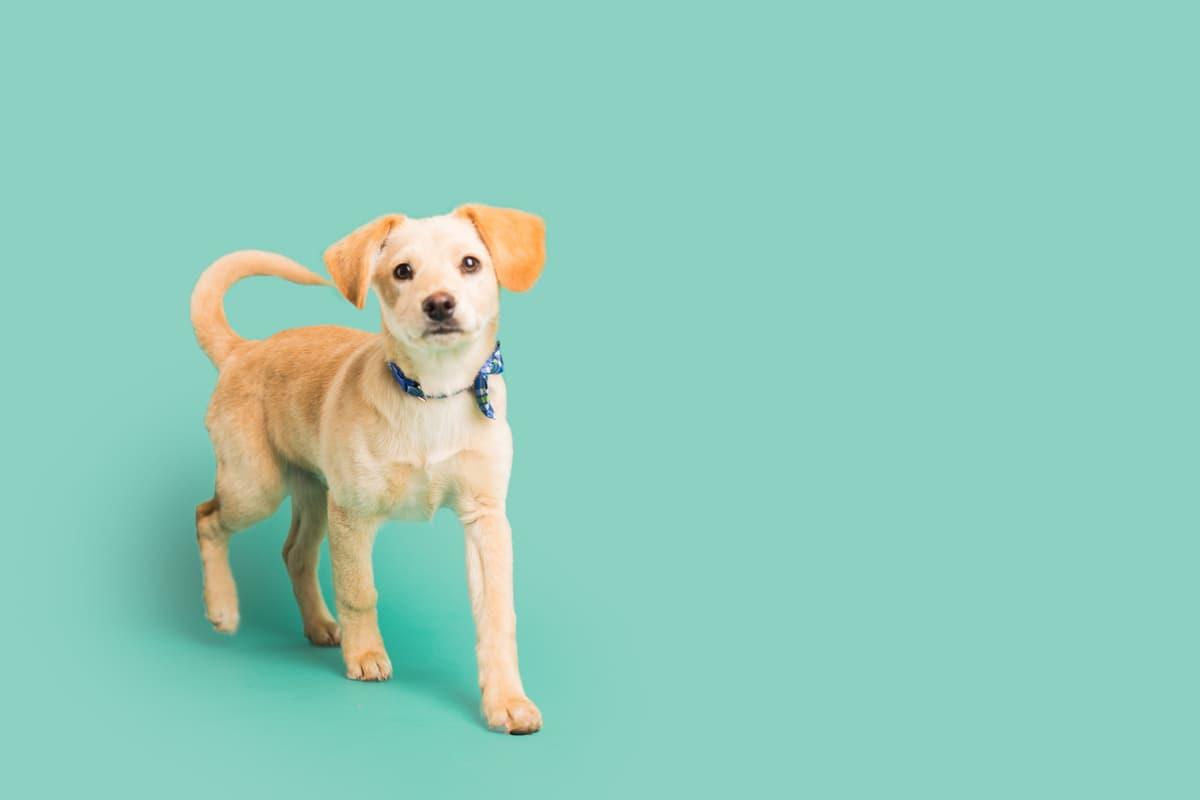 L'organo di Jacobson nel cane (Foto Adobe Stock)
