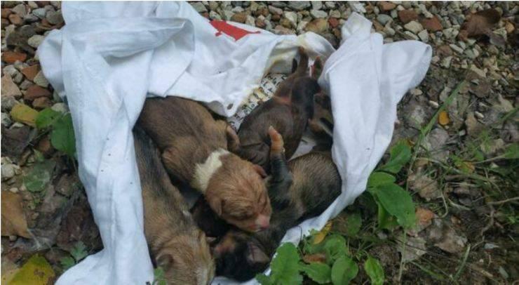 Cuccioli Salvati nel pesarese