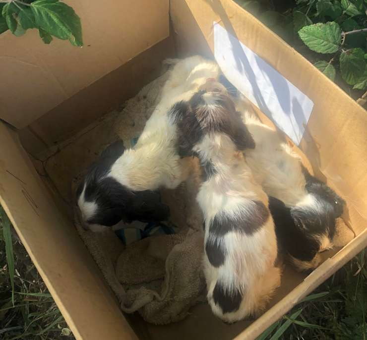 tre cuccioli abbandonati