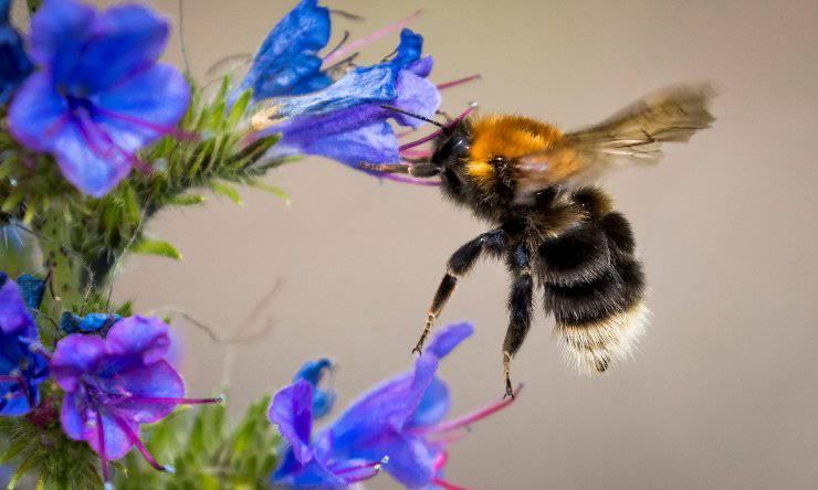 api nuova app