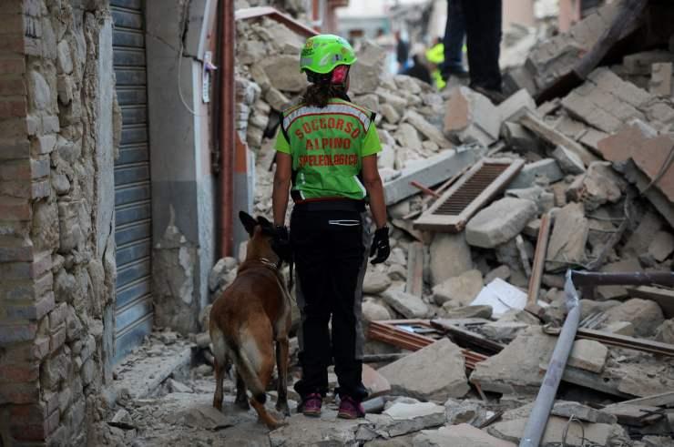 terremoto amatrice cani