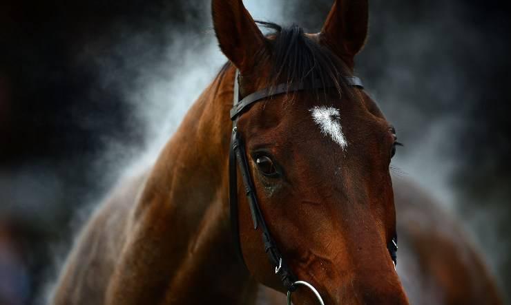 grecia cavalli macellazione