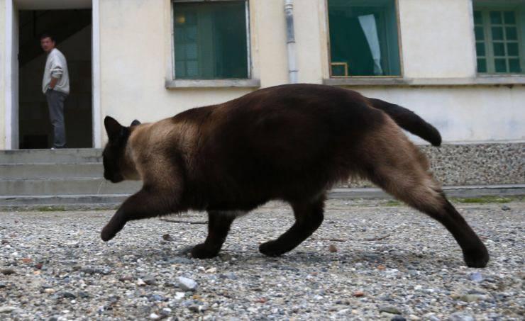 gatto contrabbandiere sri lanka prigione