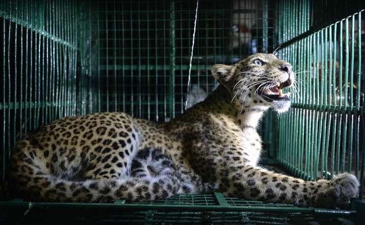 animali gabbia protesta ravenna