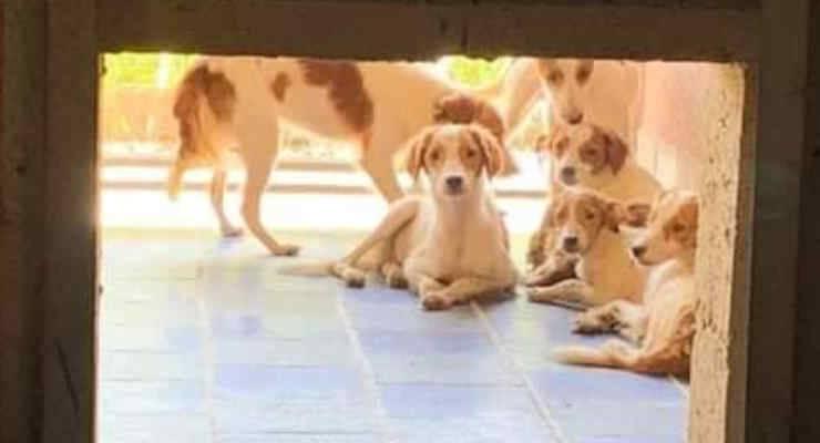 38 Cani rinchiusi in una villa a Marcignano