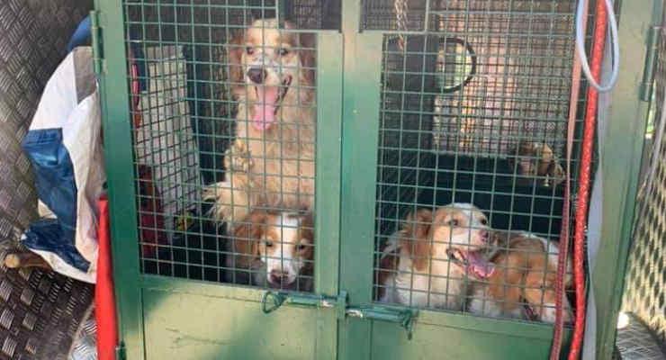 Marcignano: trentotto cani rinchiusi in una stanza al buio