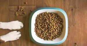 come scegliere il cibo migliore per il vostro cane