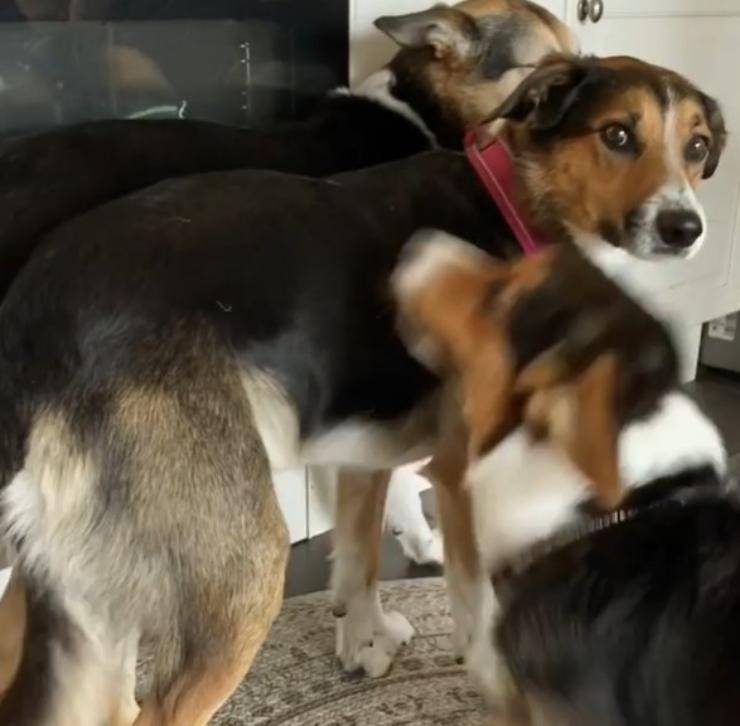 cane fratelli rubare avanzi
