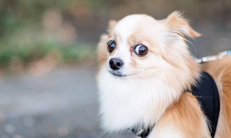 cane immobilizzato